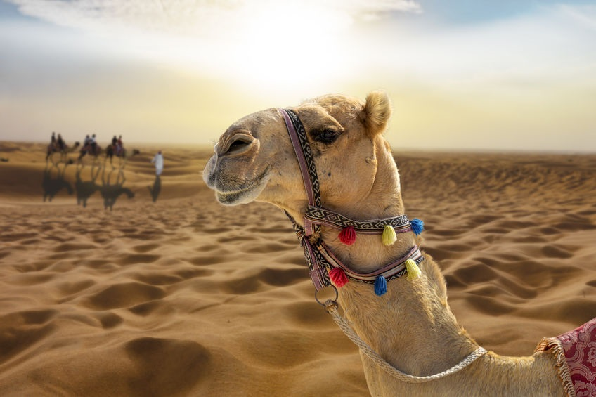 Экскурсия Пустынное Сафари